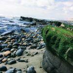 closeup tidepools bluffs beach san onofre