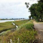 east bayshore drive trail agua hedionda lagoon
