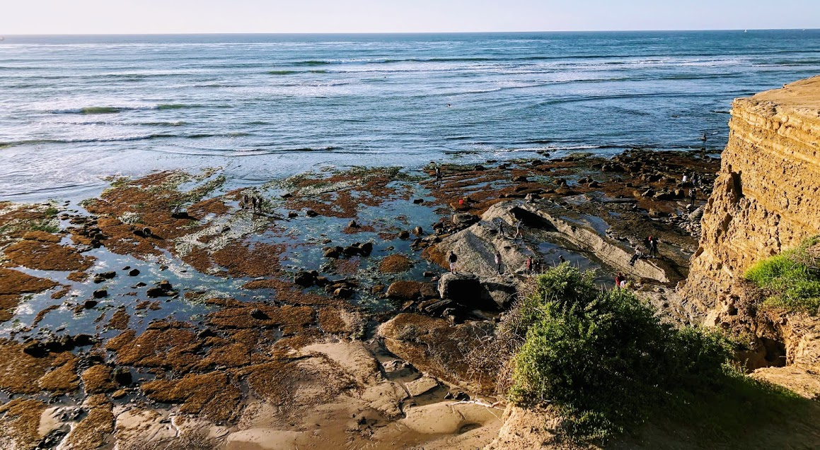 Garbage Beach 1-12-2020 king tide
