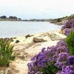 NE agua hedionda lagoon Cove Trail