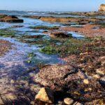 New Break Beach Low Tide Point Loma