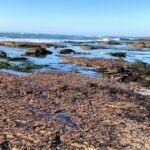 New Break Beach tide pools king tide