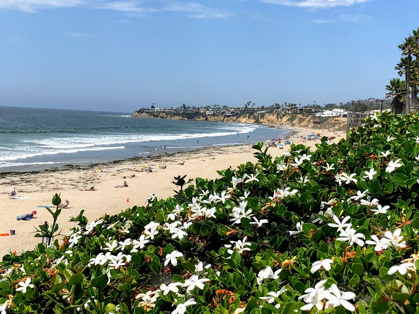 Pacific Beach 2019 year in review