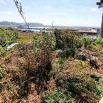 roof native garden San Elijo Lagoon Nature Center