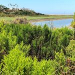 San Elijo Lagoon Gemma Parks Trail