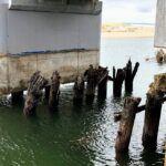 san mateo creek trestles 2019 year in review
