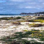 Seaside State Beach Beach evening primrose