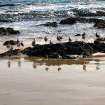 Shorebirds Crystal Cove State Park Orange County