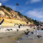 Shorebirds encinitas stonesteps beach