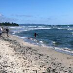 south cardiff state beach 2019 year in review