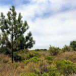 Torrey Pine Border Field State Park San Diego