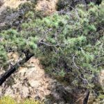 Torrey Pine tree 2019 year in review