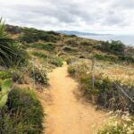 Torrey Pines Parry Grove Trail