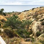 torrey pines ravine 2019 year in review