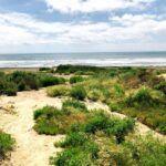 trails beach coastal strand native plants
