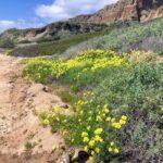 trails beach san onofre bluffs campground