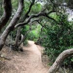 Tree tunnel torrey pines state natural reserve