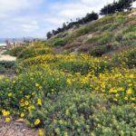 upper trestles native plants bluffs