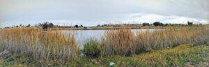 west buena vista lagoon january panoramic