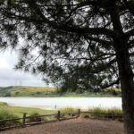 Agua hedionda lagoon bayshore dr trail torrey pine trees