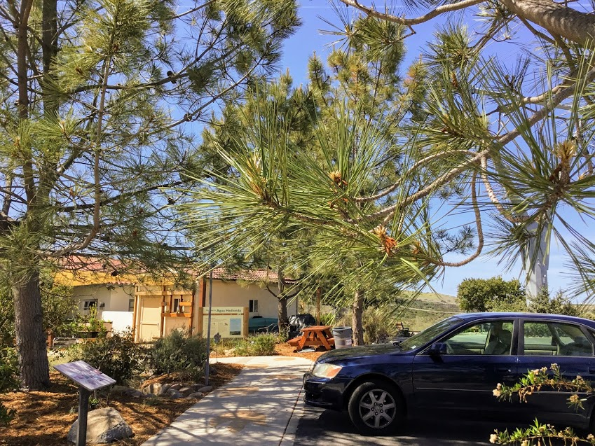 Agua Hedionda Parking lot torrey pine trees