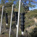 Bark beetle pheromone traps torrey pine trees