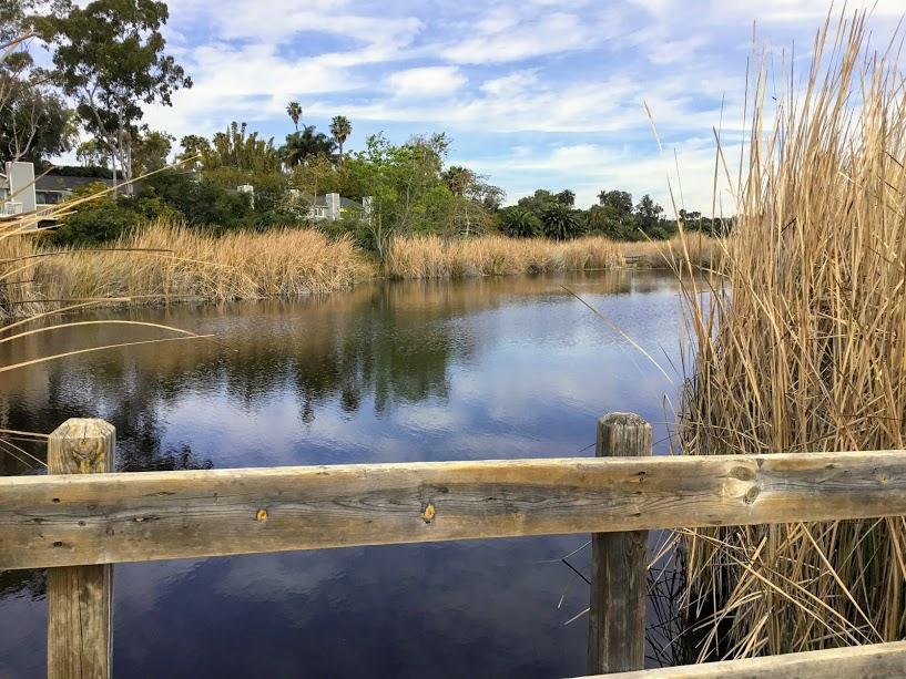 Buena Vista Lagoon audubon society