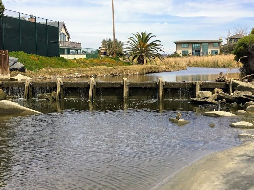 Buena Vista Lagoon Weir coastal birding