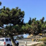 Del Mar Torrey Pine Coast to Crest Trail