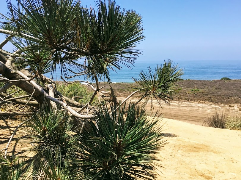 Las Flores viewpoint torrey pine trees