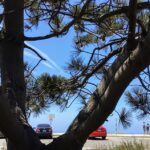Las Flores Viewpoint parking lot torrey pine trees
