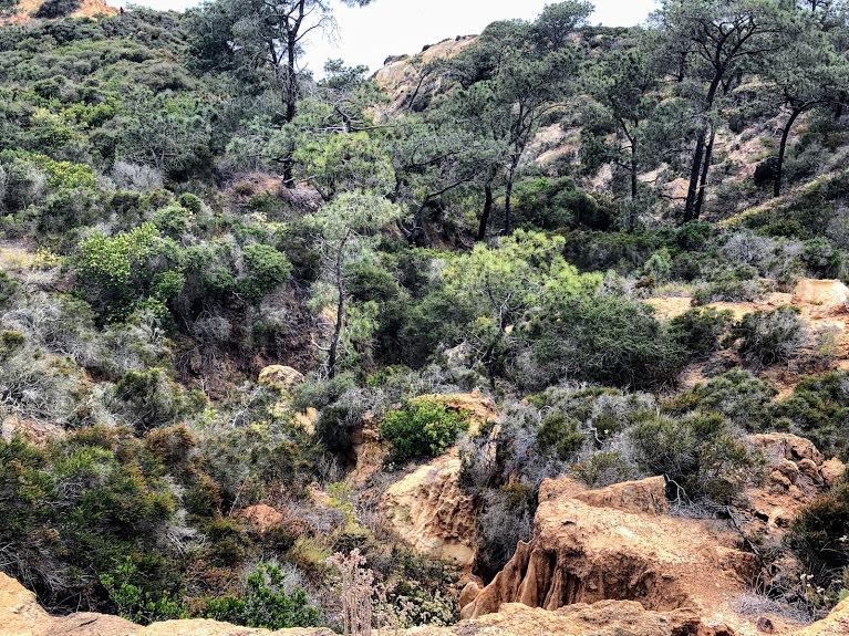 Maritime Chaparral torrey pines state natural reserve