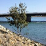 San Diego river torrey pine tree mission bay