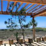 Torrey pine tree chula vista san diego bay