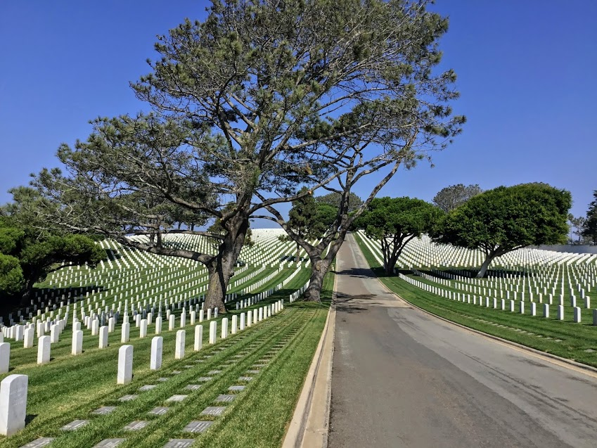 Torrey Pine trees point loma fort rosecrans national cemetery