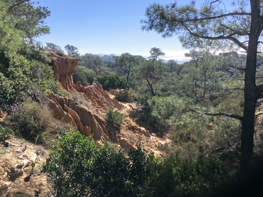Torrey pines state natural reserve march events
