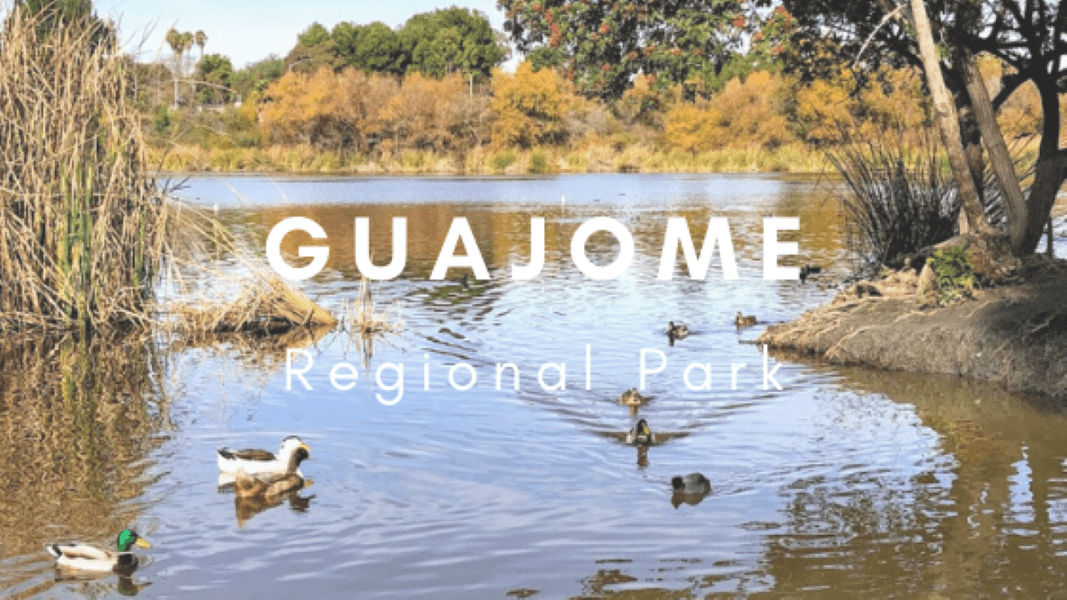 Guajome Regional Park featured image water birds cattails