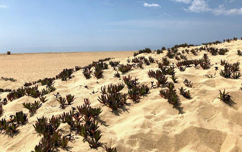 Newport Beach Sand dunes plants sky