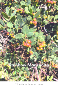 Rainbow Manzanita temecula april 2020