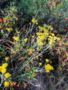 temecula chaparral southern california native plants