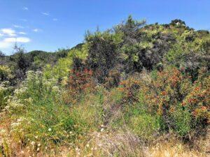 Temecula creek inn trail southern california native plants