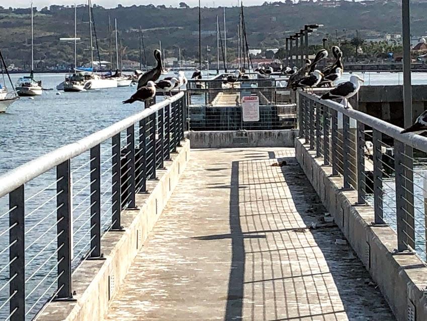 walkway concrete metal railing birds perching