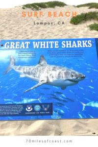 great white shark sign surf beach lompoc CA