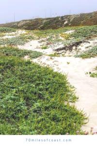 surf sand dunes ocean beach park lompoc CA