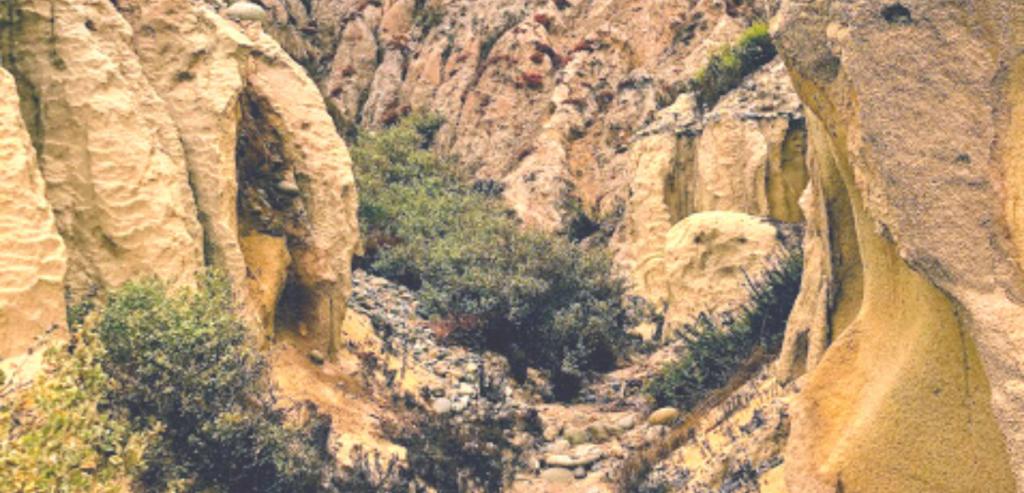 beginning gully sand stone cliffs stones plants