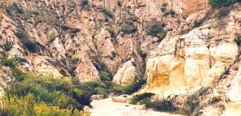 Inside bluff gully sandstone cliffs lemonade berry plants
