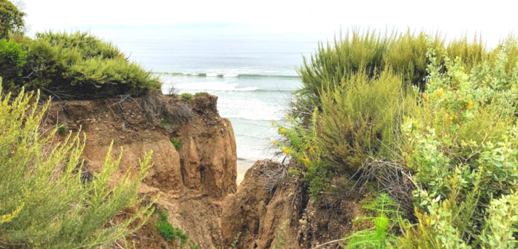 San onofre gully plants bluff ocean waves