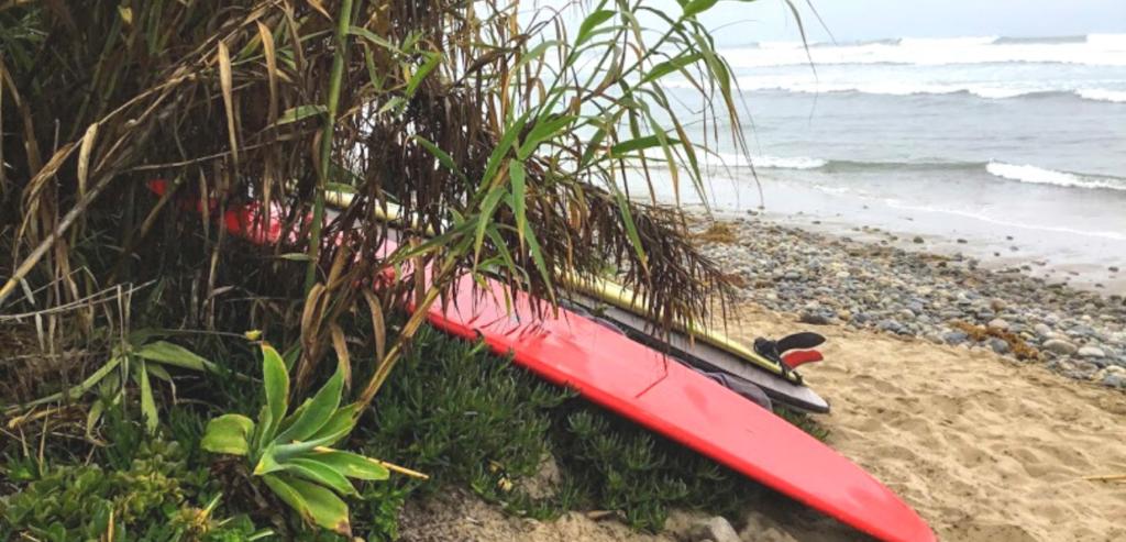 Surfboards San O plant sand ocean