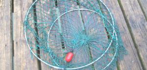 lobster hoop net california spiny lobster season
