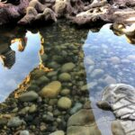 cave pool la jolla underwater park